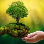 Nature-based solutions provide cost-effective strategy to meet key economic development goals while conserving nature